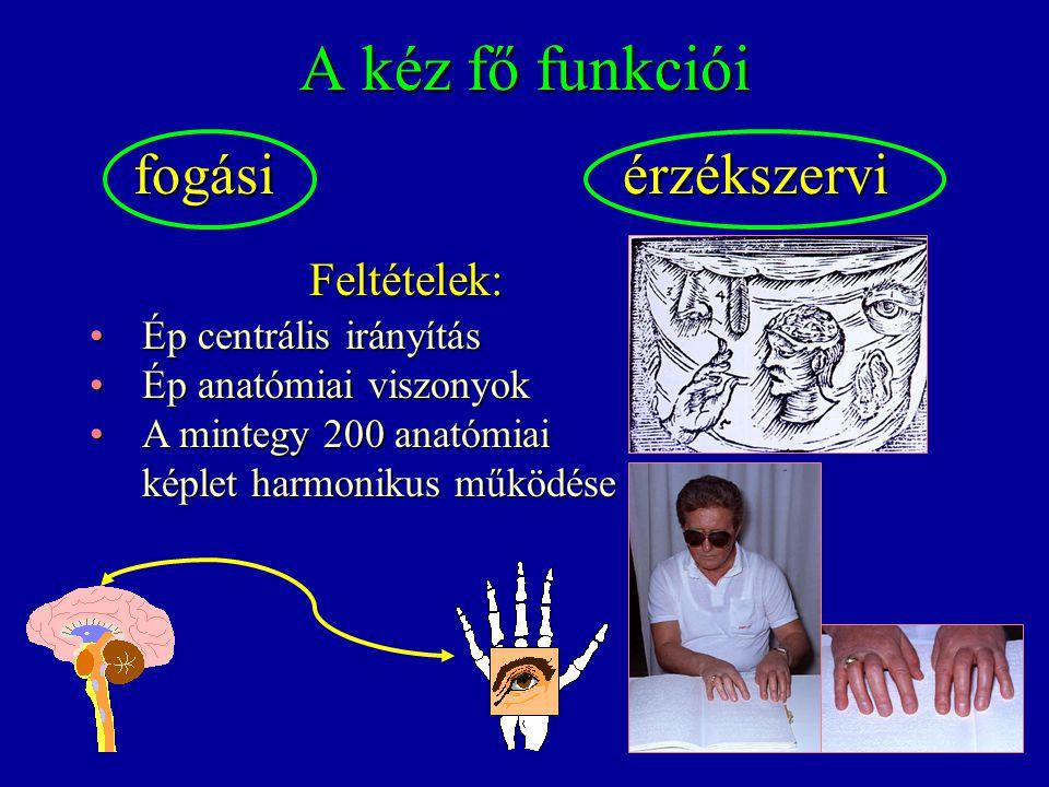 A kéz fő funkciói fogásiérzékszervi fogási érzékszervi Feltételek: Ép centrális irányításÉp centrális irányítás Ép anatómiai viszonyokÉp anatómiai viszonyok A mintegy 200 anatómiaiA mintegy 200 anatómiai képlet harmonikus működése