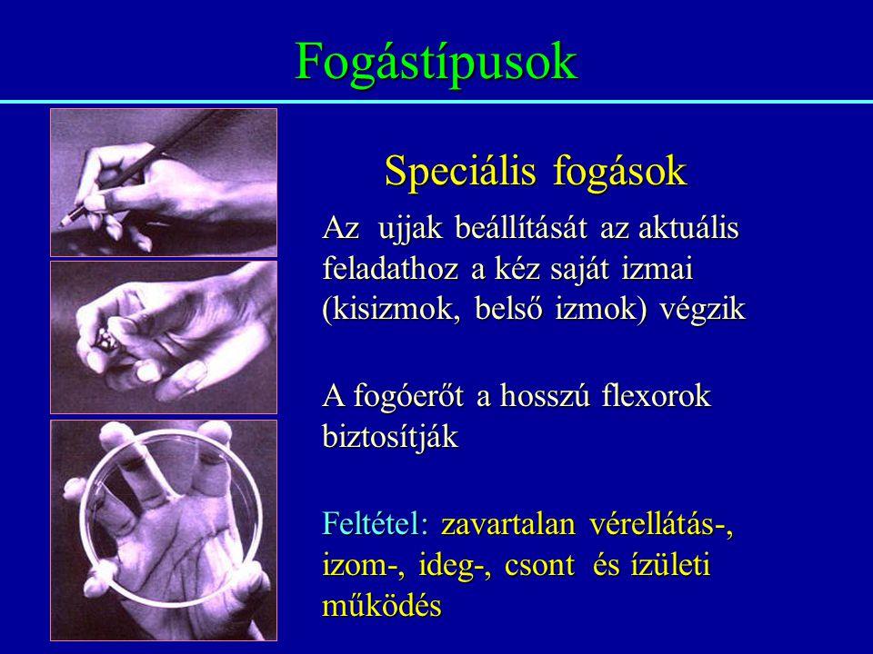 Fogástípusok Speciális fogások Az ujjak beállítását az aktuális feladathoz a kéz saját izmai (kisizmok, belső izmok) végzik A fogóerőt a hosszú flexor