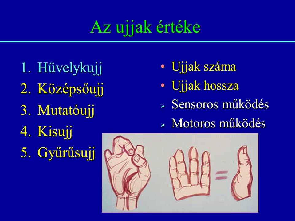 Az ujjak értéke 1.Hüvelykujj 2.Középsőujj 3.Mutatóujj 4.Kisujj 5.Gyűrűsujj Ujjak számaUjjak száma Ujjak hosszaUjjak hossza  Sensoros működés  Motoro