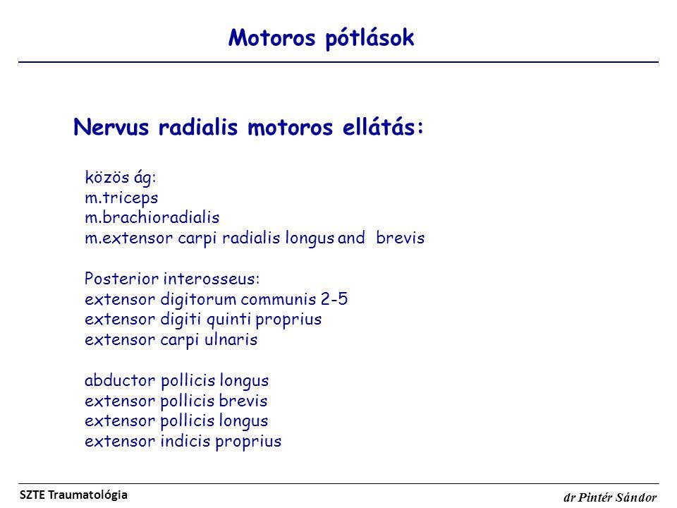 Motoros pótlások SZTE Traumatológia dr Pintér Sándor Nervus radialis motoros ellátás: közös ág: m.triceps m.brachioradialis m.extensor carpi radialis
