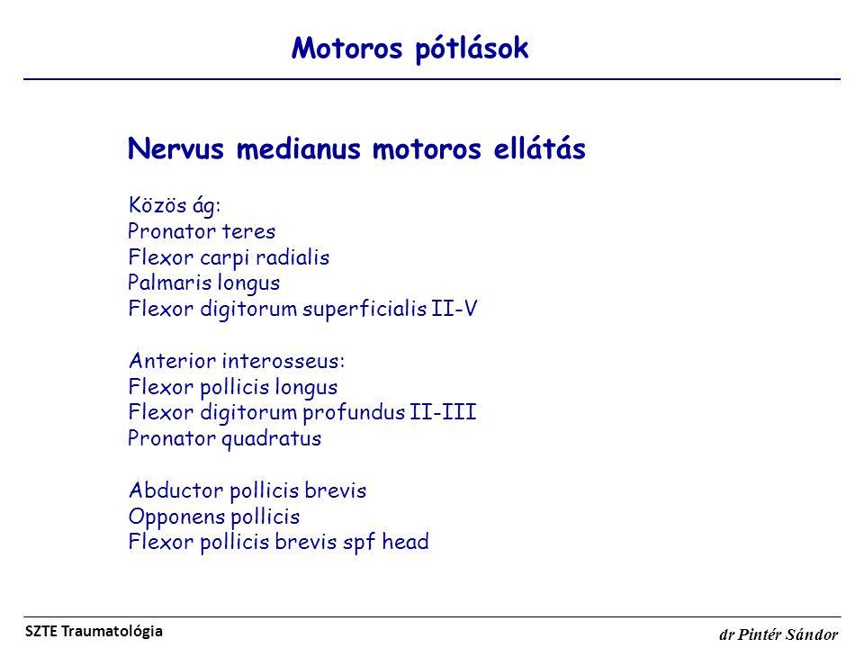 Motoros pótlások SZTE Traumatológia dr Pintér Sándor Nervus medianus motoros ellátás Közös ág: Pronator teres Flexor carpi radialis Palmaris longus Fl