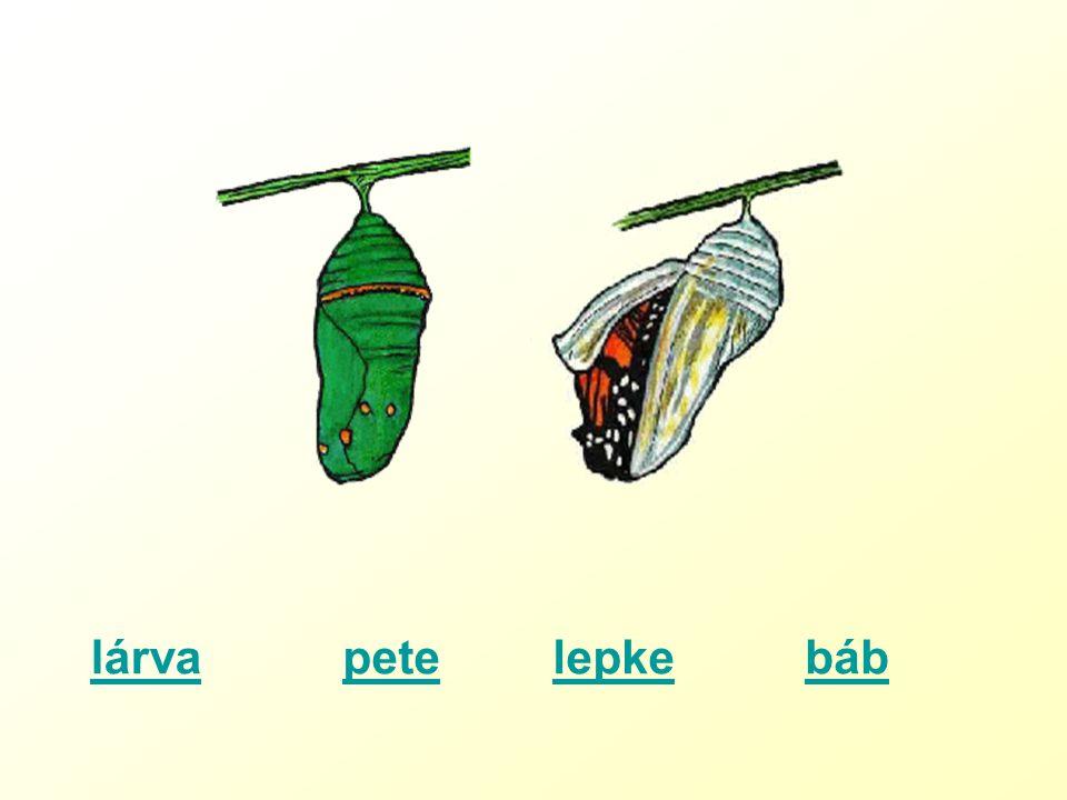 petelárvalepkebáb