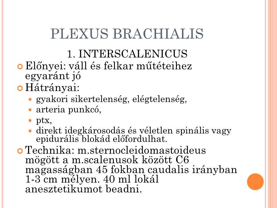 PLEXUS BRACHIALIS 1.