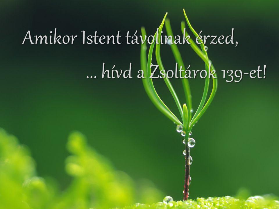 Ha hitednek erősítésre van szüksége,... hívd a Zsidók 11-et!... hívd a Zsidók 11-et!