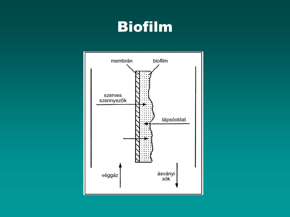 Biofilm