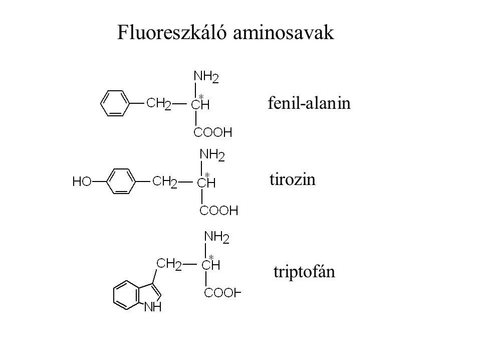 Fluoreszkáló aminosavak fenil-alanin tirozin triptofán