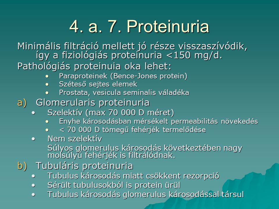 4. a. 7. Proteinuria Minimális filtráció mellett jó része visszaszívódik, így a fiziológiás proteinuria <150 mg/d. Pathológiás proteinuia oka lehet: P