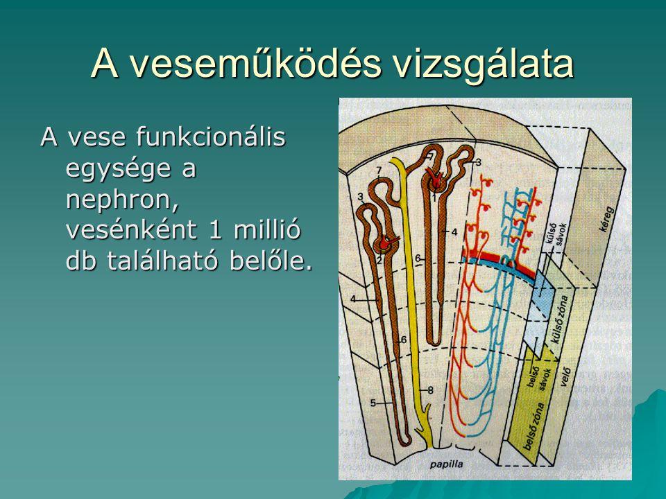 A veseműködés vizsgálata A vese funkcionális egysége a nephron, vesénként 1 millió db található belőle.