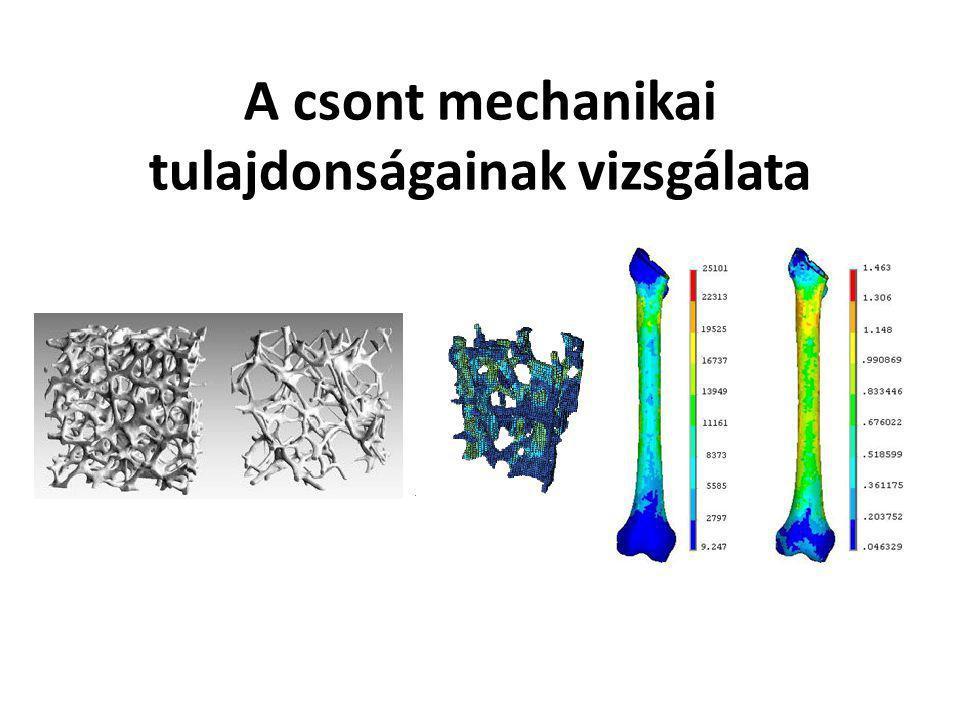Bevezetés Régi – új módszerek – Régen: húzókísérlet, intendáció, CT, mikroszkópi vizsgálat, törési vizsgálatok, kezdetleges számítógépes vizsgálat – Most: mikro-CT, Synchotron, FEA, TSEM, SEM, EDS