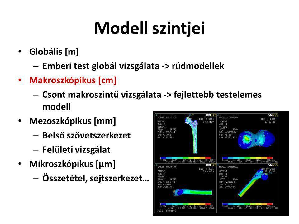 Modell szintjei Globális [m] – Emberi test globál vizsgálata -> rúdmodellek Makroszkópikus [cm] – Csont makroszintű vizsgálata -> fejlettebb testelemes modell Mezoszkópikus [mm] – Belső szövetszerkezet – Felületi vizsgálat Mikroszkópikus [μm] – Összetétel, sejtszerkezet…