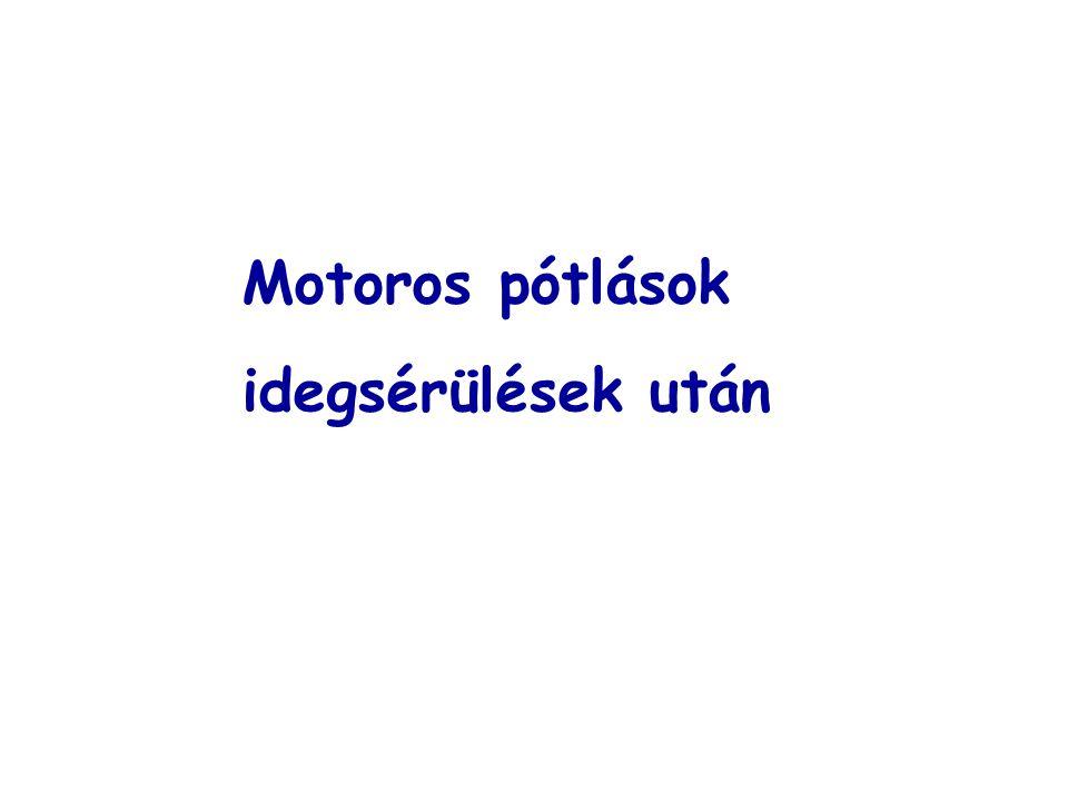 Motoros pótlások idegsérülések után