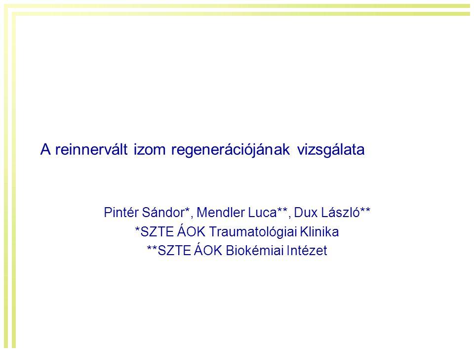 A reinnervált izom regenerációjának vizsgálata Pintér Sándor*, Mendler Luca**, Dux László** *SZTE ÁOK Traumatológiai Klinika **SZTE ÁOK Biokémiai Inté