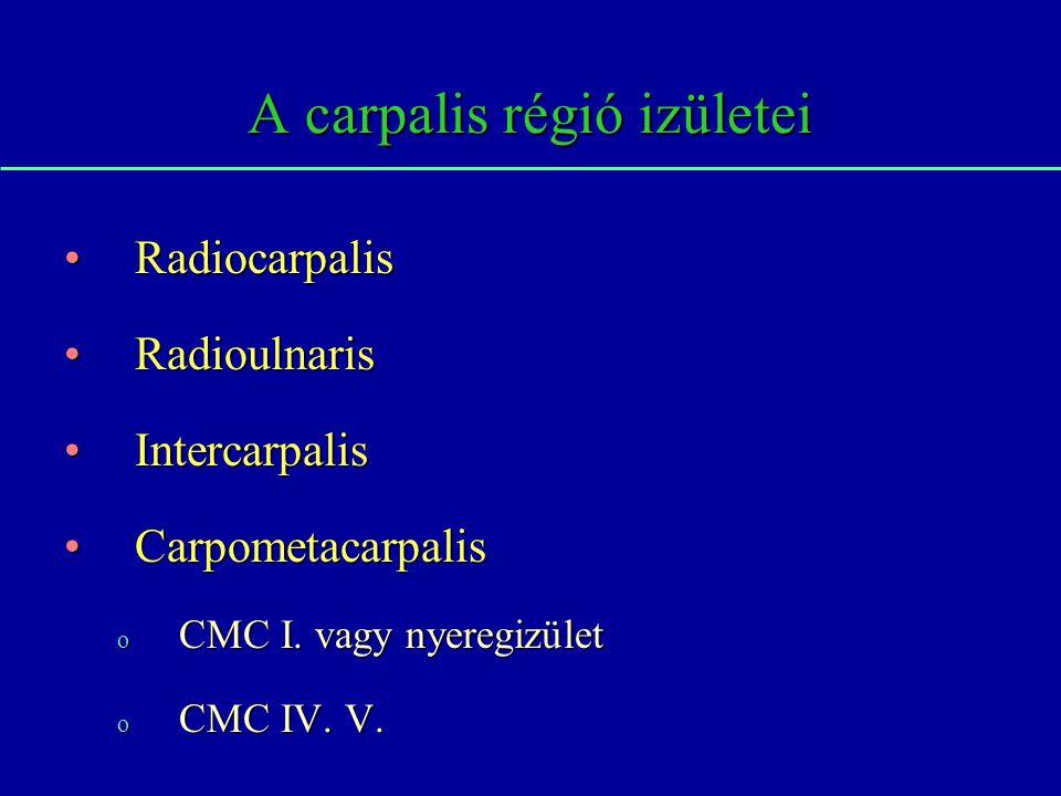 A carpalis régió izületei RadiocarpalisRadiocarpalis RadioulnarisRadioulnaris IntercarpalisIntercarpalis CarpometacarpalisCarpometacarpalis o CMC I. v