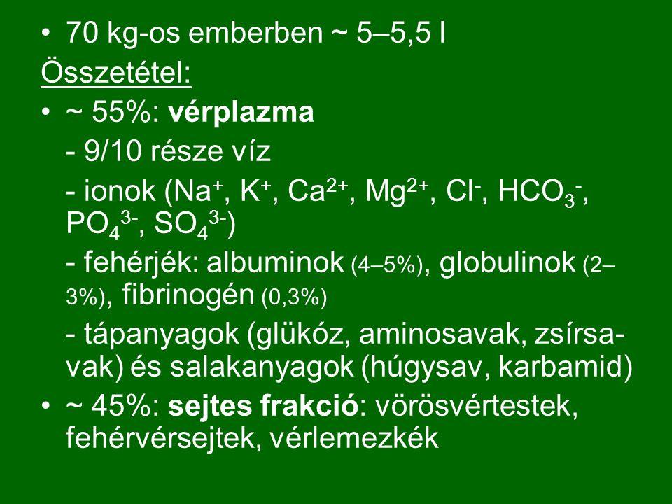 4) Helyreállító folyamatok: Fibrinolízis: plazmin (enzim) oldja fel ( keringő plazminogénből )