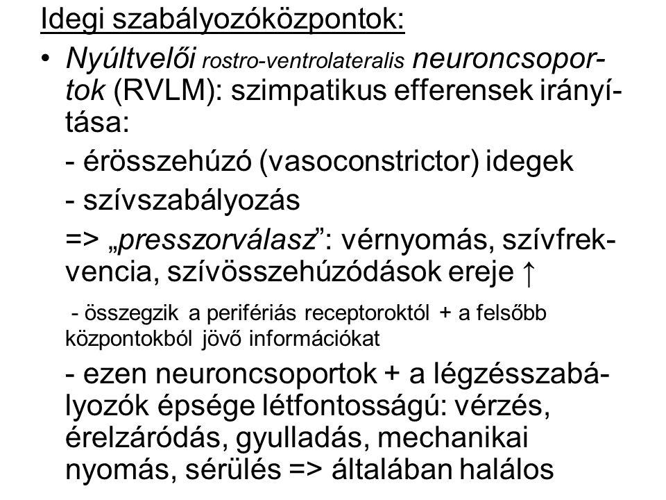 Idegi szabályozóközpontok: Nyúltvelői rostro-ventrolateralis neuroncsopor- tok (RVLM): szimpatikus efferensek irányí- tása: - érösszehúzó (vasoconstri