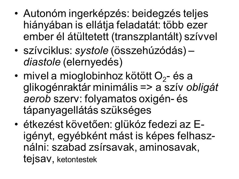 Keringési autoreguláció: ischaemia (vérellátási hiányosság) – oedema (vizenyő) közötti tartományban: vérnyomás ↑ => agyi érellenállás ↑ = agyi vérellátás független a perfúziós nyomástól.