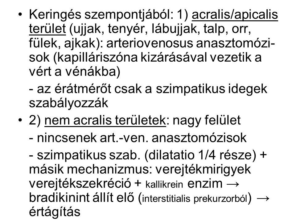 Keringés szempontjából: 1) acralis/apicalis terület (ujjak, tenyér, lábujjak, talp, orr, fülek, ajkak): arteriovenosus anasztomózi- sok (kapilláriszón