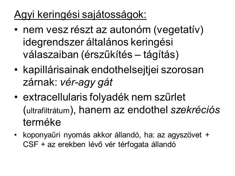 Agyi keringési sajátosságok: nem vesz részt az autonóm (vegetatív) idegrendszer általános keringési válaszaiban (érszűkítés – tágítás) kapillárisainak