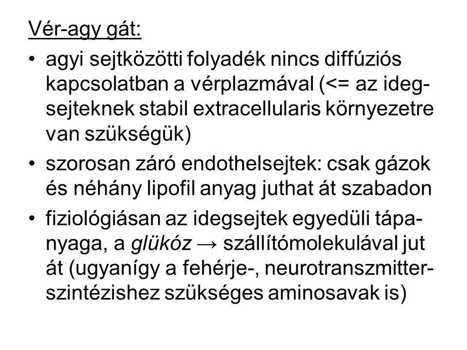 Vér-agy gát: agyi sejtközötti folyadék nincs diffúziós kapcsolatban a vérplazmával (<= az ideg- sejteknek stabil extracellularis környezetre van szüks