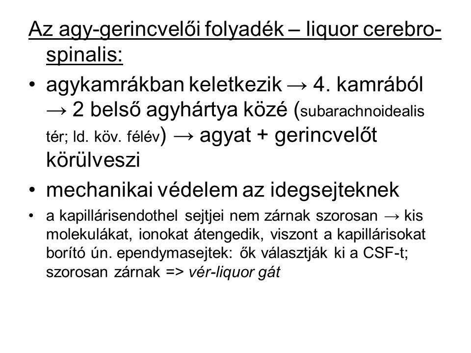 Az agy-gerincvelői folyadék – liquor cerebro- spinalis: agykamrákban keletkezik → 4. kamrából → 2 belső agyhártya közé ( subarachnoidealis tér; ld. kö
