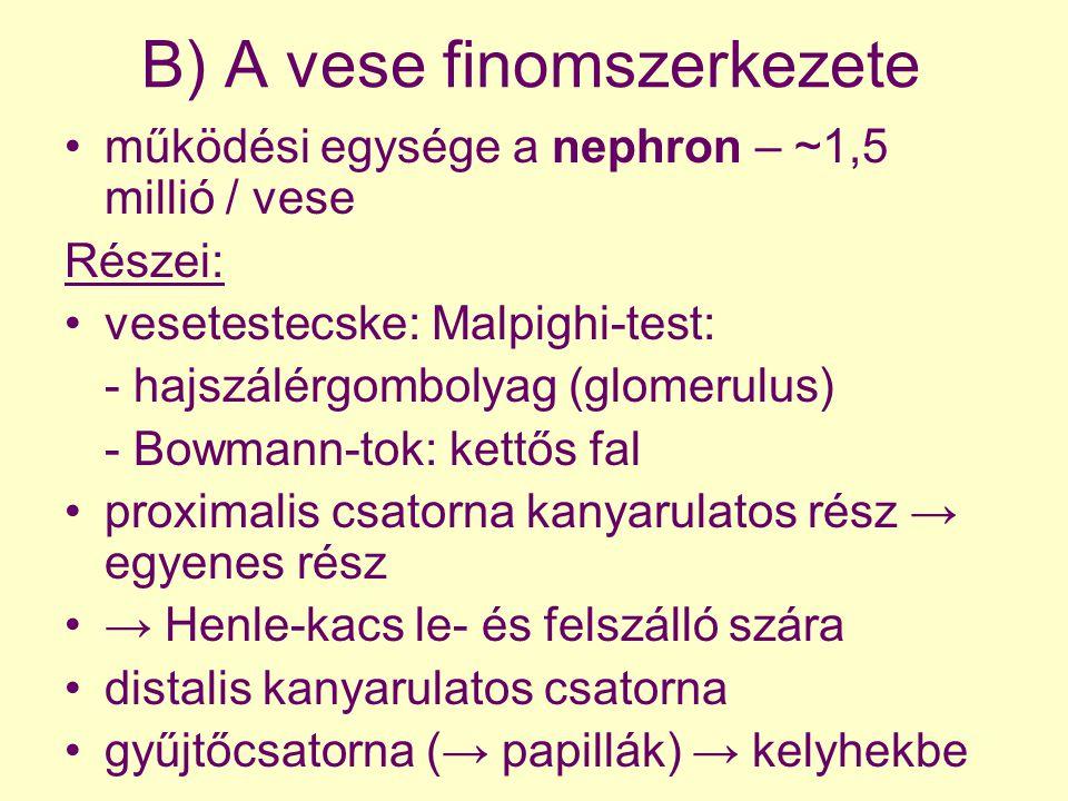 B) A vese finomszerkezete működési egysége a nephron – ~1,5 millió / vese Részei: vesetestecske: Malpighi-test: - hajszálérgombolyag (glomerulus) - Bo
