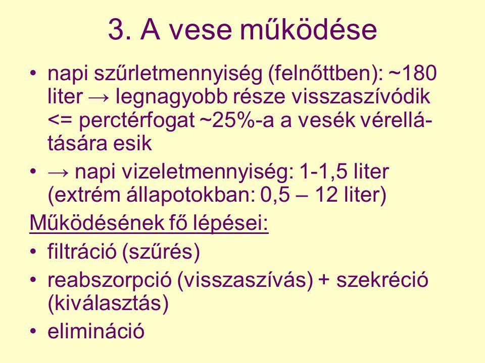3. A vese működése napi szűrletmennyiség (felnőttben): ~180 liter → legnagyobb része visszaszívódik <= perctérfogat ~25%-a a vesék vérellá- tására esi