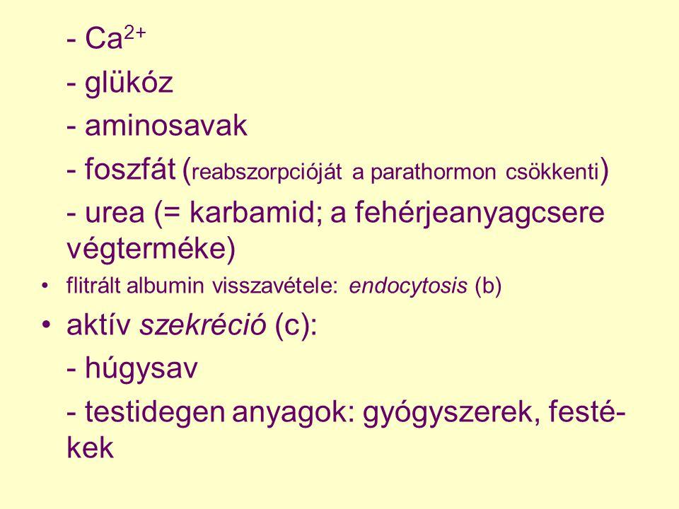 - Ca 2+ - glükóz - aminosavak - foszfát ( reabszorpcióját a parathormon csökkenti ) - urea (= karbamid; a fehérjeanyagcsere végterméke) flitrált album