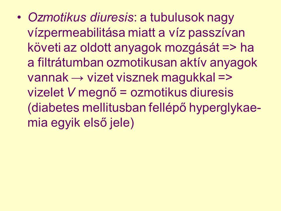 Ozmotikus diuresis: a tubulusok nagy vízpermeabilitása miatt a víz passzívan követi az oldott anyagok mozgását => ha a filtrátumban ozmotikusan aktív