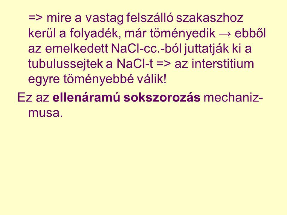 => mire a vastag felszálló szakaszhoz kerül a folyadék, már töményedik → ebből az emelkedett NaCl-cc.-ból juttatják ki a tubulussejtek a NaCl-t => az