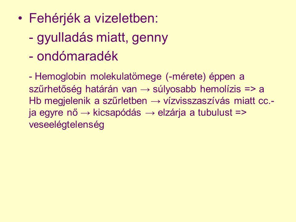 Fehérjék a vizeletben: - gyulladás miatt, genny - ondómaradék - Hemoglobin molekulatömege (-mérete) éppen a szűrhetőség határán van → súlyosabb hemolí