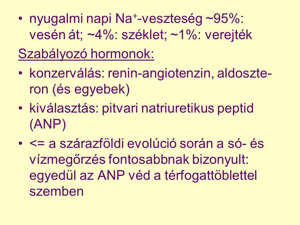 nyugalmi napi Na + -veszteség ~95%: vesén át; ~4%: széklet; ~1%: verejték Szabályozó hormonok: konzerválás: renin-angiotenzin, aldoszte- ron (és egyeb