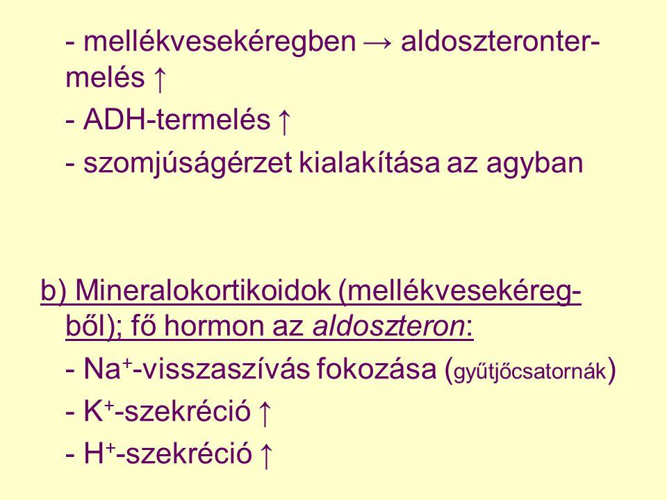 - mellékvesekéregben → aldoszteronter- melés ↑ - ADH-termelés ↑ - szomjúságérzet kialakítása az agyban b) Mineralokortikoidok (mellékvesekéreg- ből);