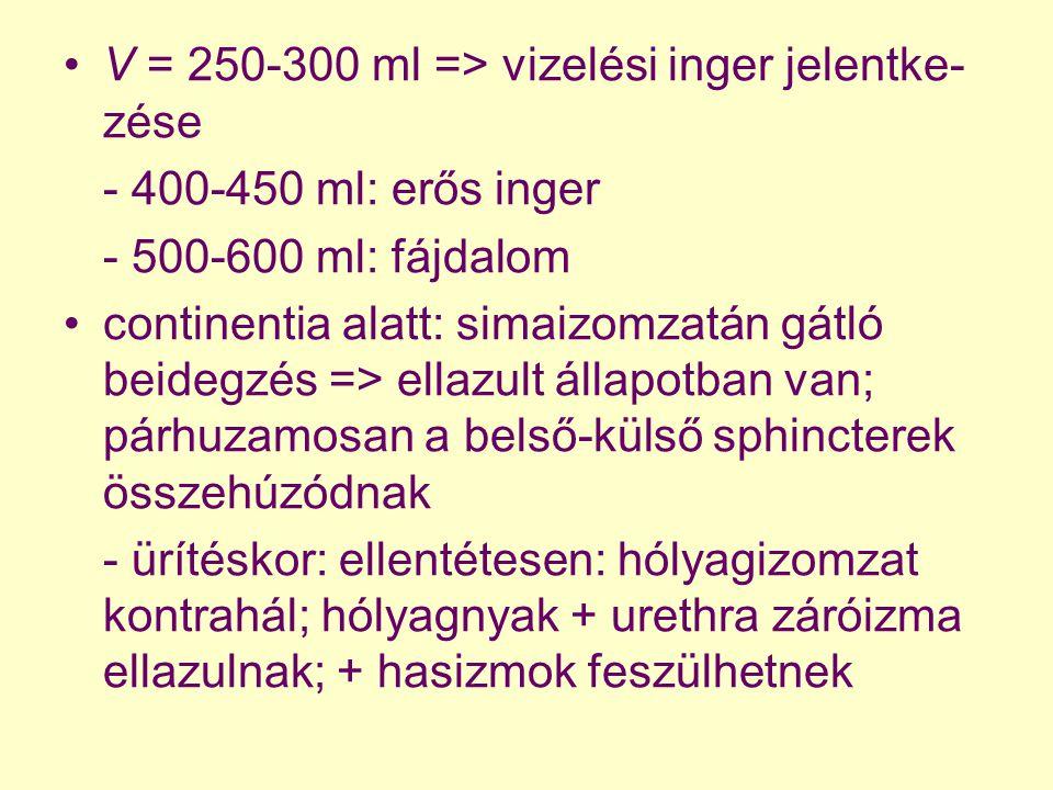 V = 250-300 ml => vizelési inger jelentke- zése - 400-450 ml: erős inger - 500-600 ml: fájdalom continentia alatt: simaizomzatán gátló beidegzés => el