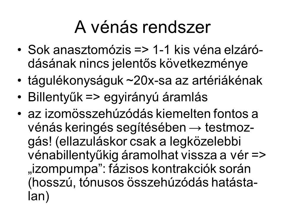 A vénás rendszer Sok anasztomózis => 1-1 kis véna elzáró- dásának nincs jelentős következménye tágulékonyságuk ~20x-sa az artériákénak Billentyűk => e