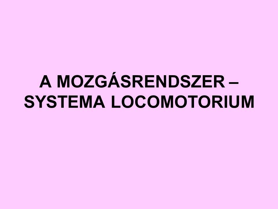 A MOZGÁSRENDSZER – SYSTEMA LOCOMOTORIUM