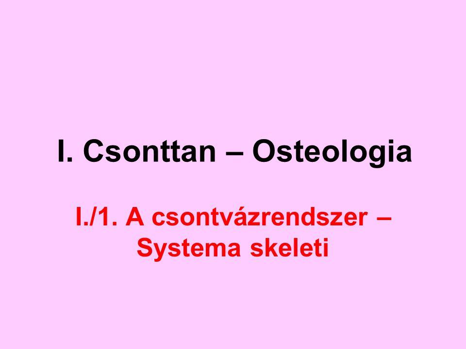 I. Csonttan – Osteologia I./1. A csontvázrendszer – Systema skeleti