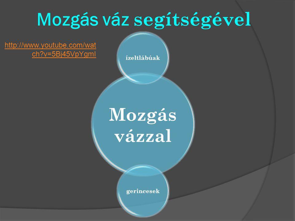 Mozgás váz segítségével Mozgás vázzal ízeltlábúakgerincesek http://www.youtube.com/wat ch?v=5Bj45VpYgmI