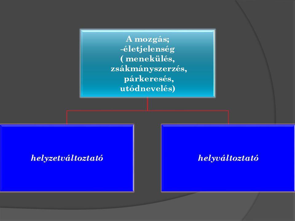 A mozgás; -életjelenség ( menekülés, zsákmányszerzés, párkeresés, utódnevelés) helyzetváltoztatóhelyváltoztató