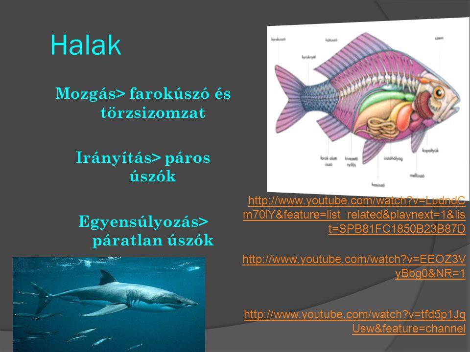 Halak Mozgás> farokúszó és törzsizomzat Irányítás> páros úszók Egyensúlyozás> páratlan úszók http://www.youtube.com/watch?v=tfd5p1Jq Usw&feature=chann