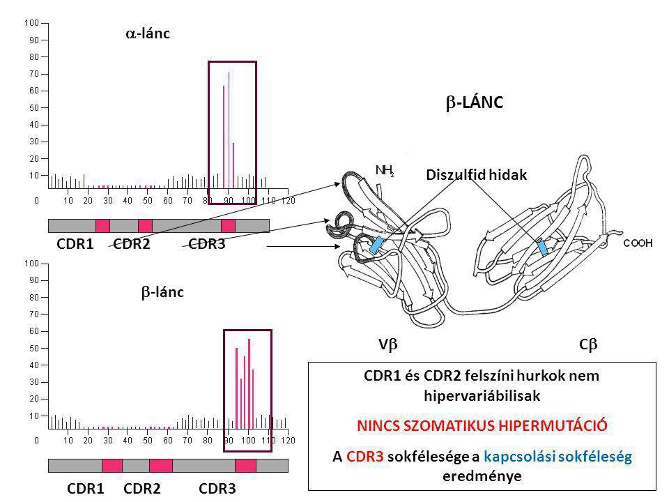 CDR1 CDR2 CDR3  -lánc  -lánc CDR1 CDR2 CDR3 VCVC  -LÁNC Diszulfid hidak CDR1 és CDR2 felszíni hurkok nem hipervariábilisak NINCS SZOMATIKUS HIP