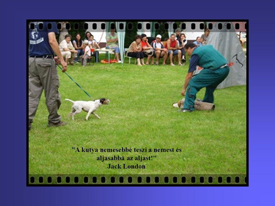 A legtöbb kutyatulajdonosnak hosszas tanulás árán sikerül elérnie, hogy engedelmeskedjen a kutyájának.