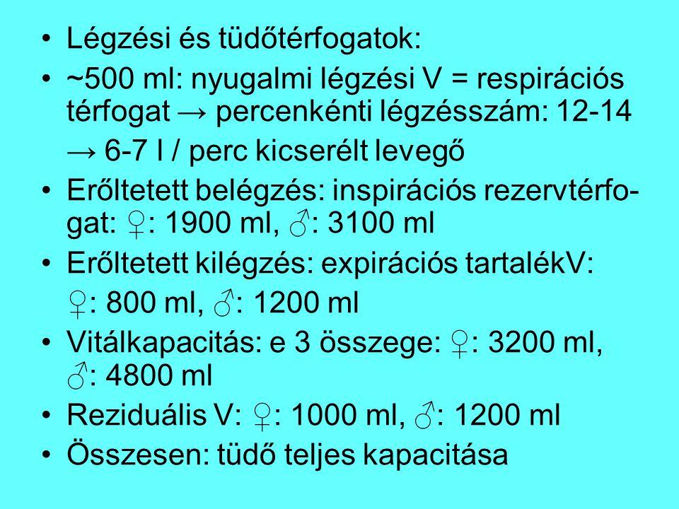 Légzési és tüdőtérfogatok: ~500 ml: nyugalmi légzési V = respirációs térfogat → percenkénti légzésszám: 12-14 → 6-7 l / perc kicserélt levegő Erőltete