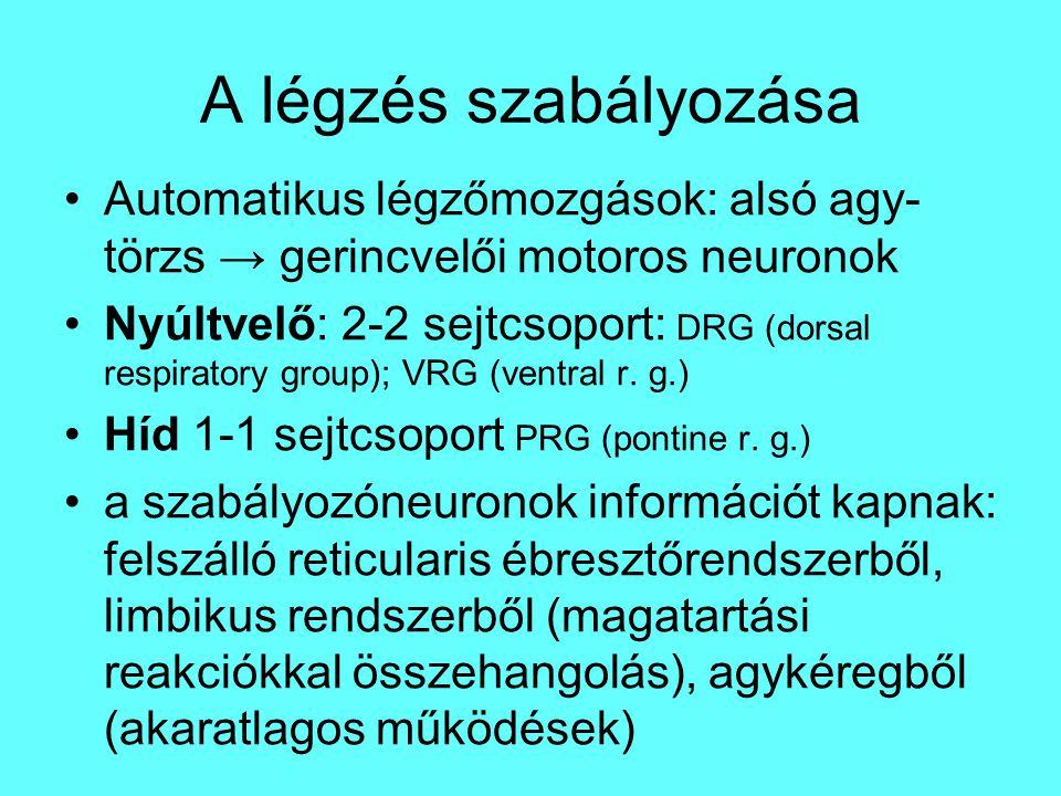 Automatikus légzőmozgások: alsó agy- törzs → gerincvelői motoros neuronok Nyúltvelő: 2-2 sejtcsoport: DRG (dorsal respiratory group); VRG (ventral r.