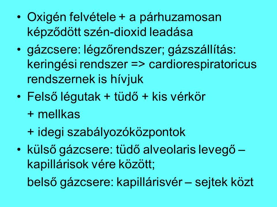 Légutak: felső légutak: orr / szájüreg, garat ( pharynx ), gége ( larynx ) → légcső (trachea): C alakú porcok merevítik → 2 főhörgőre ( bronchus principalis ) oszlik → tüdő (pulmo) ezután még 23 kettéágazás → hörgők (bronchusok; bronchi) → hörgőcskék ( bronchiolusok; br.terminales ): itt már porc nincs, csak simaizomszövet→ ezután brocnhioli respiratorii: gázcsrerében már részt vevő hörgőcskék → ductus alveolaris → léghólyagocskák: alveolus ( tsz.: alveoli )