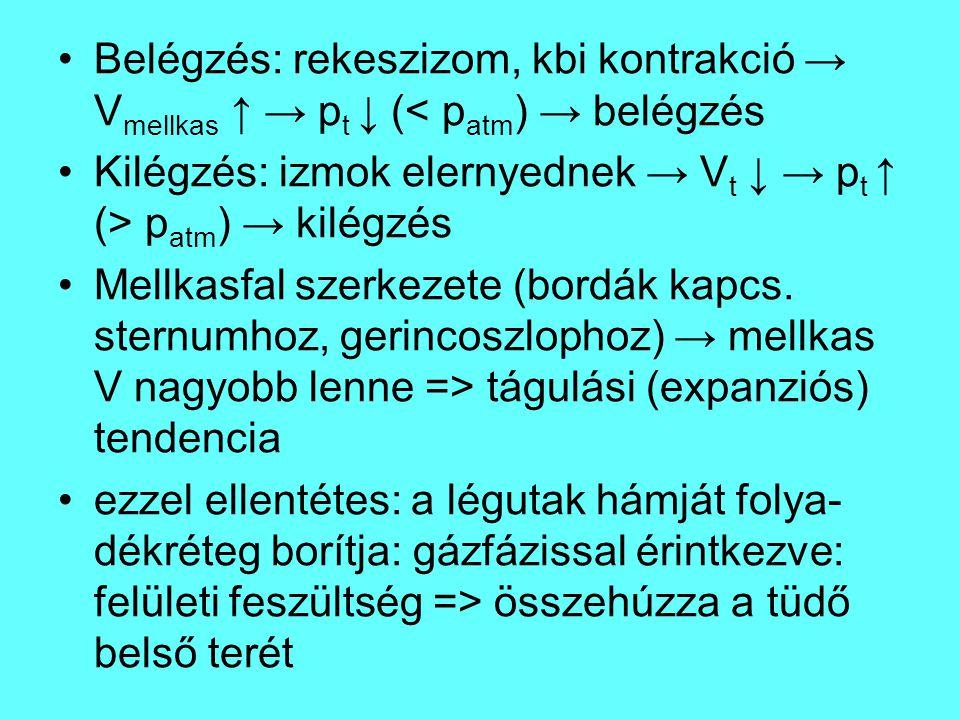 Belégzés: rekeszizom, kbi kontrakció → V mellkas ↑ → p t ↓ (< p atm ) → belégzés Kilégzés: izmok elernyednek → V t ↓ → p t ↑ (> p atm ) → kilégzés Mel