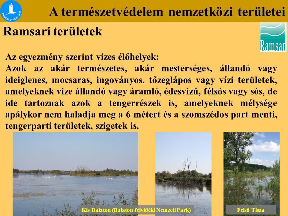 A természetvédelem nemzetközi területei Ramsari területek Az egyezmény szerint vizes élőhelyek: Azok az akár természetes, akár mesterséges, állandó va