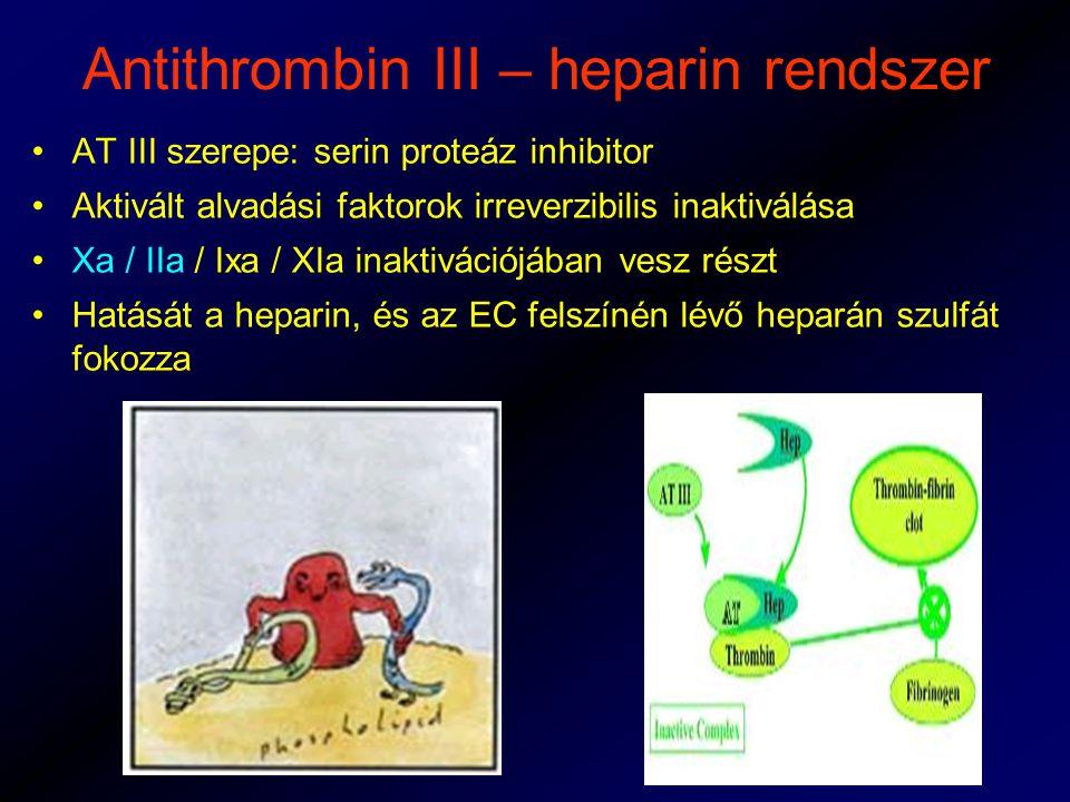 Antithrombin III – heparin rendszer AT III szerepe: serin proteáz inhibitor Aktivált alvadási faktorok irreverzibilis inaktiválása Xa / IIa / Ixa / XIa inaktivációjában vesz részt Hatását a heparin, és az EC felszínén lévő heparán szulfát fokozza