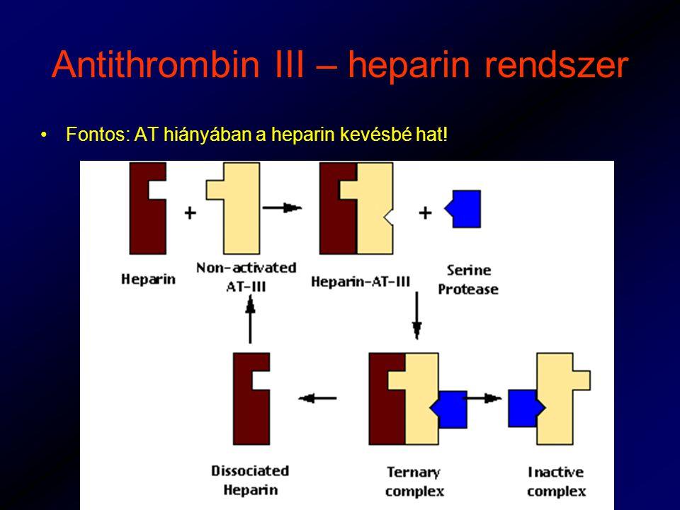 Antithrombin III – heparin rendszer Fontos: AT hiányában a heparin kevésbé hat!
