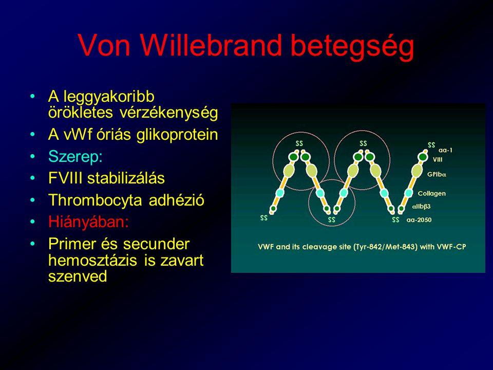 Von Willebrand betegség A leggyakoribb örökletes vérzékenység A vWf óriás glikoprotein Szerep: FVIII stabilizálás Thrombocyta adhézió Hiányában: Primer és secunder hemosztázis is zavart szenved