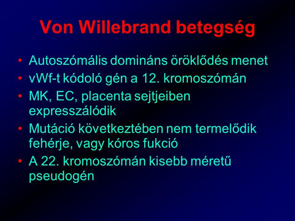 Von Willebrand betegség Autoszómális domináns öröklődés menet vWf-t kódoló gén a 12.